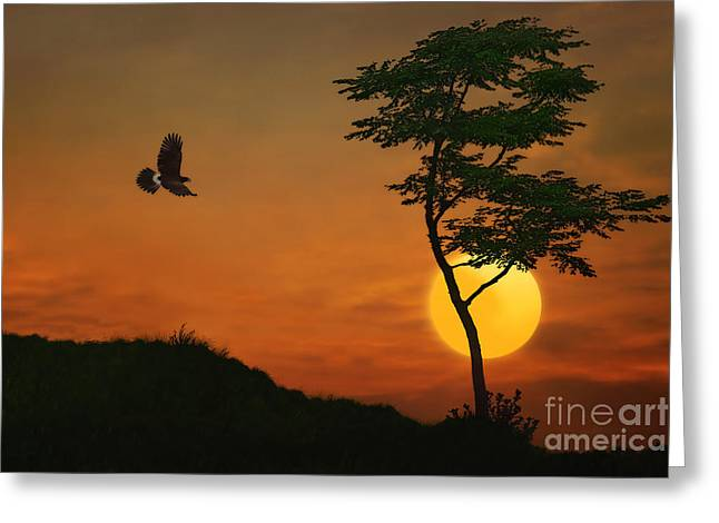 Bird Scape Greeting Cards - A Hawk In The Sunset Greeting Card by Tom York Images