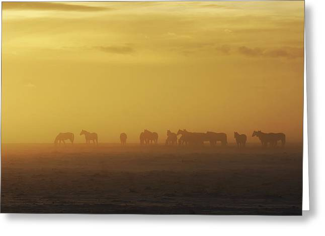 Silhouettes Of Horses Greeting Cards - A Herd Of Horses In The Morning Fog Greeting Card by Roberta Murray