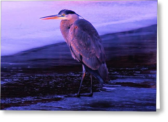 A Heron On The Moyie River Greeting Card by Jeff Swan