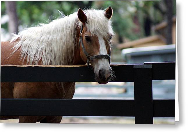 Kim Pate Greeting Cards - A Hilton Head Island Horse Greeting Card by Kim Pate