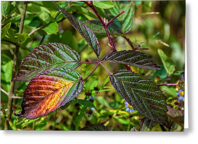 Shiny Leaves Greeting Cards - A Hint of Autumn Greeting Card by Steve Harrington