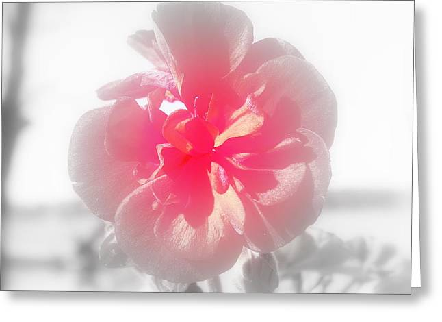 Red Geraniums Greeting Cards - A Hint of Red Greeting Card by Lisa Wooten