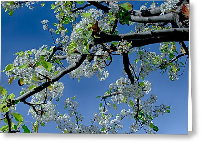 Tress Greeting Cards Greeting Cards - A Hint of Spring Greeting Card by Joseph Hollingsworth