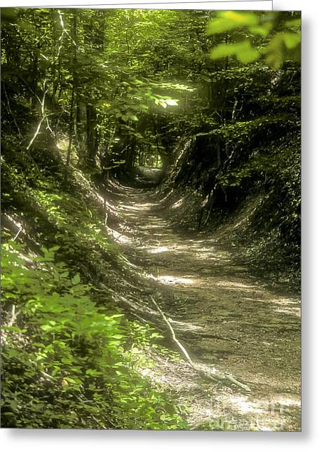 Natchez Trace Parkway Greeting Cards - A Hole in the Forest Greeting Card by Bob Phillips