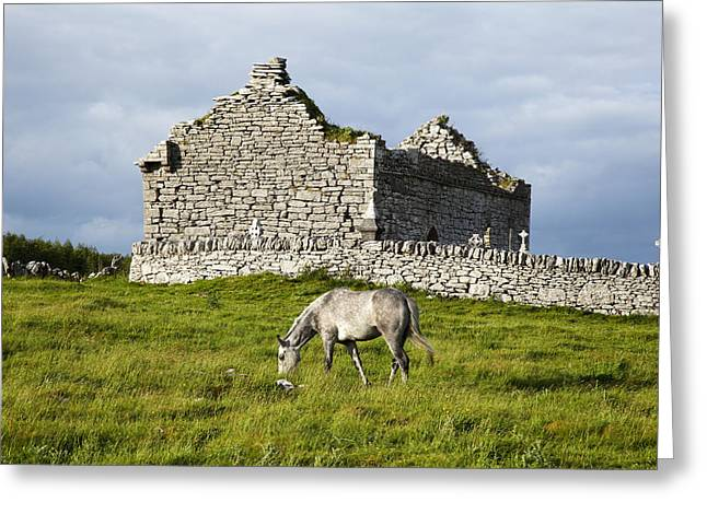 Grave Side Greeting Cards - A Horse Grazing In A Field Greeting Card by Peter Zoeller