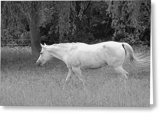 White Horses Photographs Posters Greeting Cards - A Horse Named Sprite - Black and White Greeting Card by Suzanne Gaff