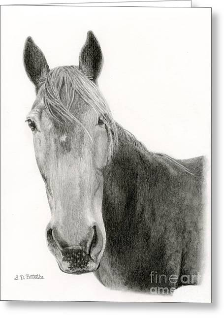 Western Pencil Drawings Greeting Cards - A Horse Of Course Greeting Card by Sarah Batalka