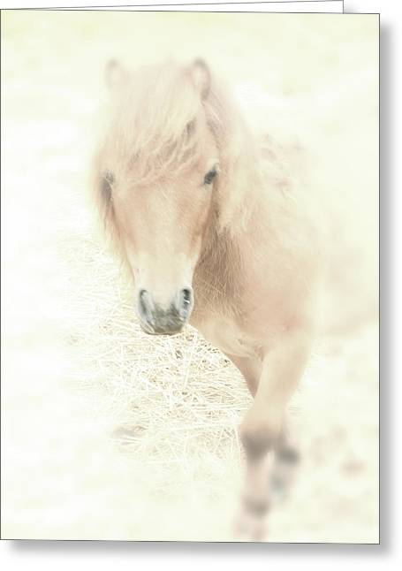 Spiritual Animal Greeting Cards - A Horses Spirit Greeting Card by Karol  Livote