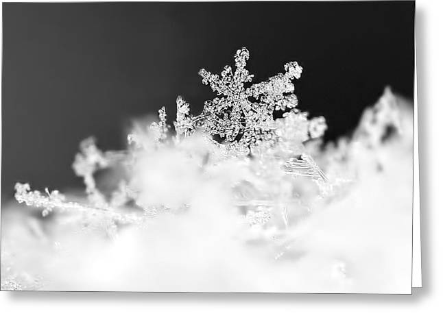 Snowflake Greeting Cards - A Jewel of a Snowflake Greeting Card by Rona Black