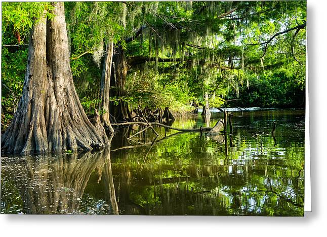 Bald Cypress Greeting Cards - A jungle of bald cypress trees Greeting Card by Ellie Teramoto