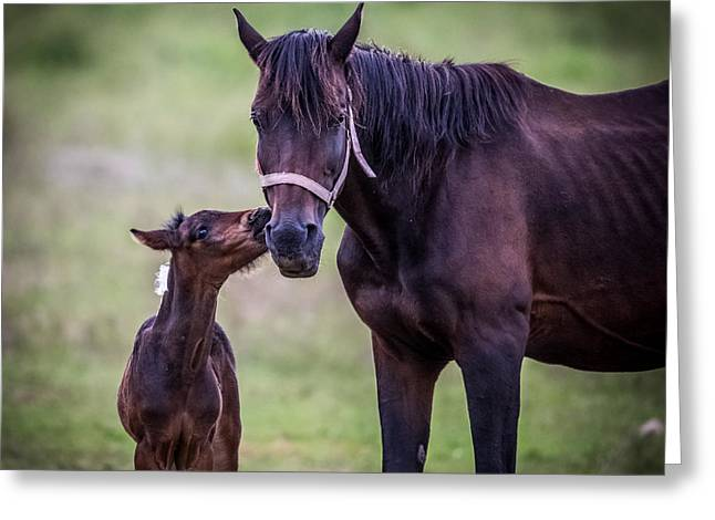 Horses With Nature Greeting Cards - A kiss for Mom Greeting Card by Paul Freidlund