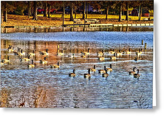 South For The Winter Greeting Cards - A Lake Full of Life Greeting Card by Barry Jones