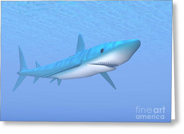 Aggressive Digital Greeting Cards - A Large Blue Shark Swimming Quietly Greeting Card by Elena Duvernay