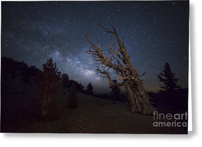 Pinaceae Greeting Cards - A Large Bristlecone Pine Greeting Card by Dan Barr