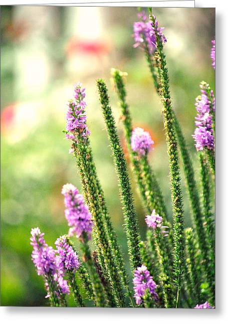 A Lavender Garden Greeting Card by Chastity Hoff