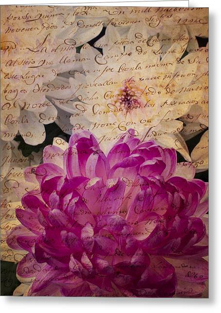 Pink Chrysanthemums Greeting Cards - A letter to the mums Greeting Card by Garry Gay