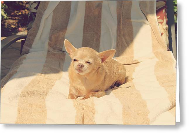 Chihuahua Portraits Greeting Cards - A Life of Leisure Greeting Card by Laurie Search