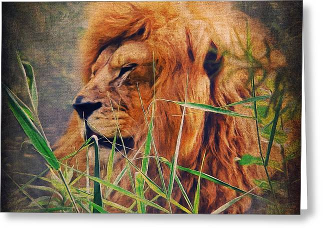 Lion Greeting Cards - A Lion Portrait Greeting Card by Angela Doelling AD DESIGN Photo and PhotoArt