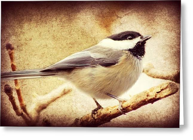 Warbler Digital Art Greeting Cards - A Little Bird Told Me Greeting Card by Aurelio Zucco