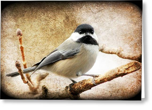 Warbler Digital Art Greeting Cards - A Little Bird Told Me II Greeting Card by Aurelio Zucco