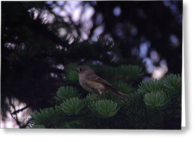 Little Critters Greeting Cards - A Little Birdie With Big Eyes Greeting Card by Jeff  Swan