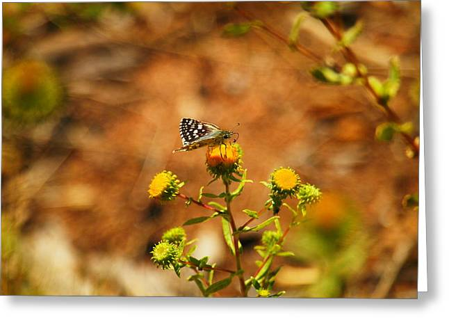 Flying Insect Greeting Cards - A Little Butterfly Lands Greeting Card by Jeff  Swan
