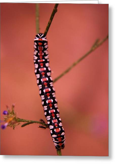 Living Things Greeting Cards - A Little Caterpillar Greeting Card by Jeff  Swan