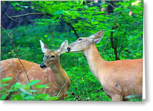 Most Viewed Digital Greeting Cards - A Little More To The Right Please Greeting Card by Lorna Rogers Photography