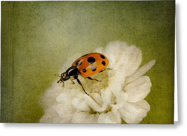Ladybird Greeting Cards - A Little Tipsy Daisy Greeting Card by Constance Fein Harding