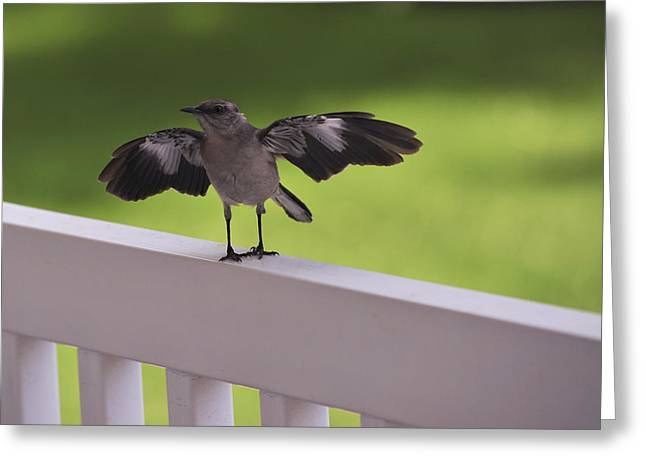 Mockingbird Greeting Cards - A little Visitor Northern Mockingbird Greeting Card by Terry DeLuco