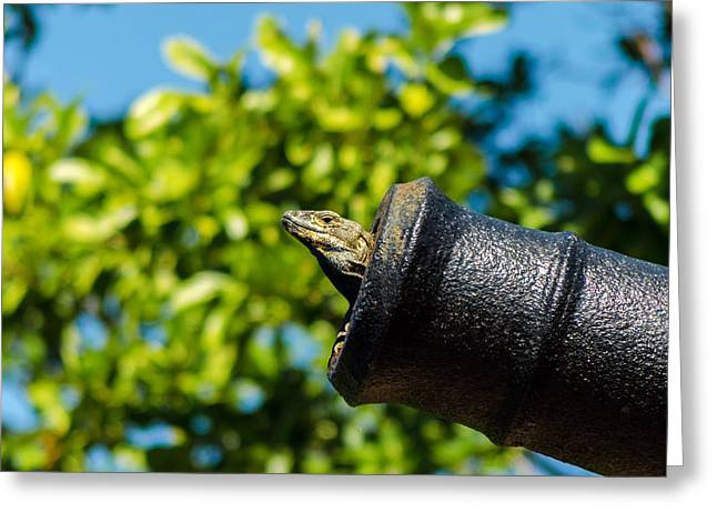 Lizard Head Greeting Cards - A Lizard in a Cannon Greeting Card by Jess Kraft