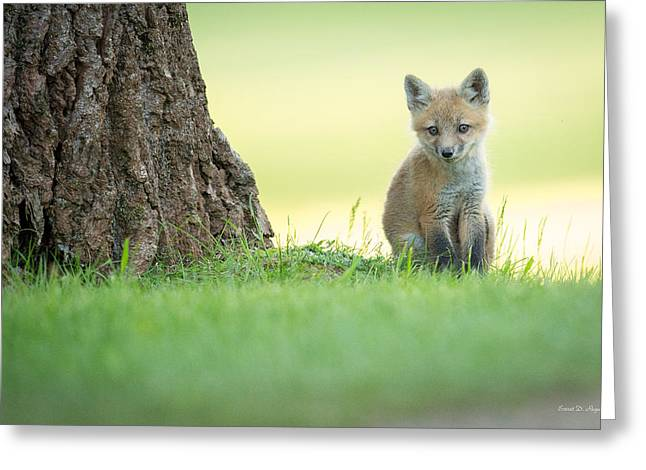 Fox Kit Greeting Cards - A lone kit Greeting Card by Everet Regal