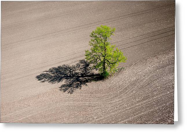 Aerial View Greeting Cards - A lone tree in a newly seeded corn field. Richmond Ontario dairy farm. Greeting Card by Rob Huntley