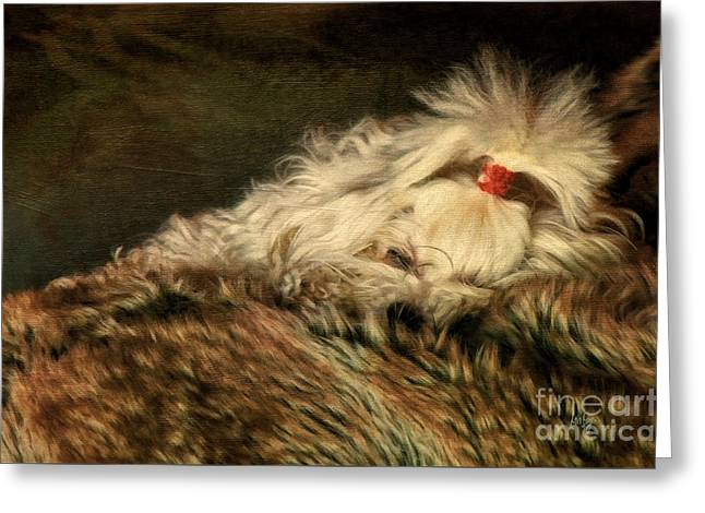 Sleeping Maltese Greeting Cards - A Long Winters Nap Greeting Card by Lois Bryan