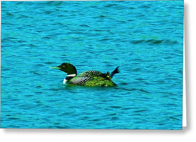 A LOONIE LOON Greeting Card by Jeff  Swan