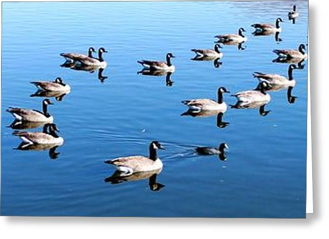 A lot of Geese Greeting Card by Eric w Martin