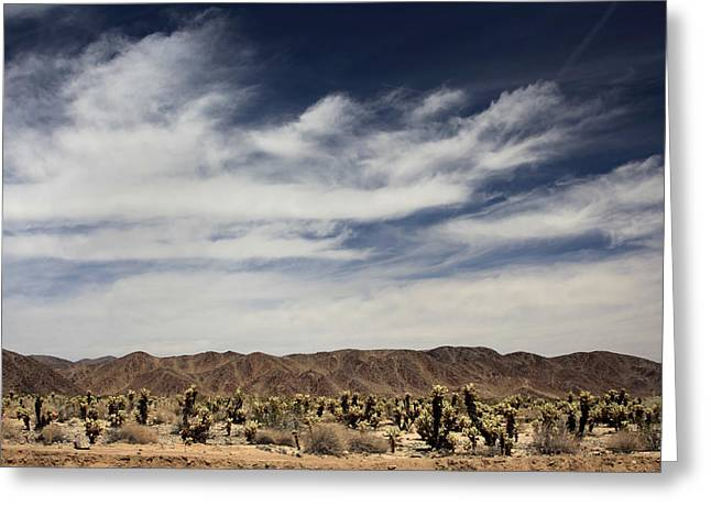 Joshua Tree National Park Greeting Cards - A Mad World Greeting Card by Laurie Search
