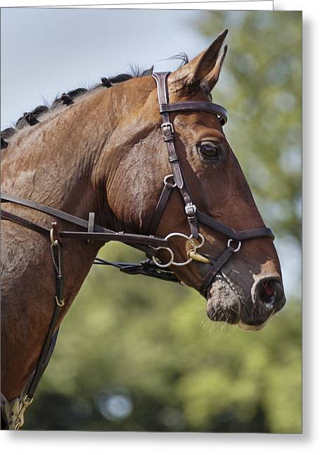 Showjumping Greeting Cards - A Magnificent Beast Greeting Card by Nigel Jones