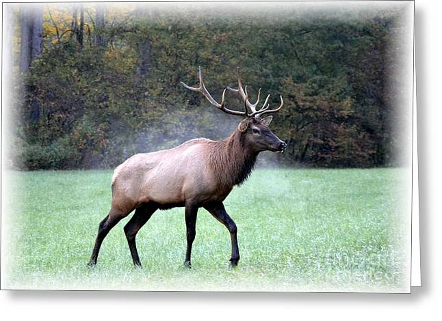 A Majestic Elk Greeting Card by Mel Steinhauer