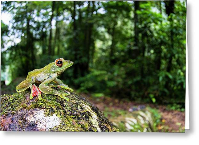 A Malayan Flying Frog Greeting Card by Scubazoo