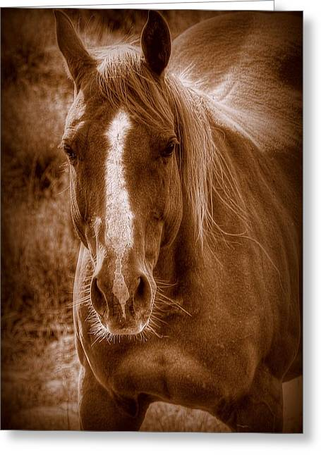 Quarter Horses Greeting Cards - A  MARE ica Greeting Card by Ryan Smith
