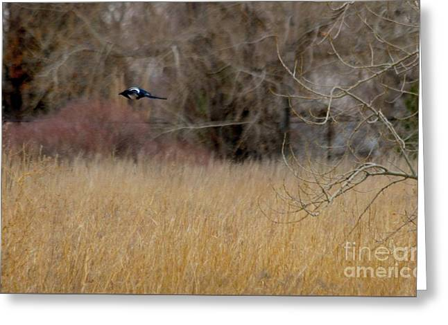 A Meadow Captured Flyby  Greeting Card by Angela Koehler