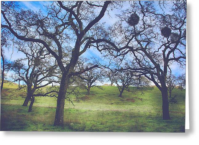 Bare Oak Tree Greeting Cards - A Meeting of Men Greeting Card by Laurie Search