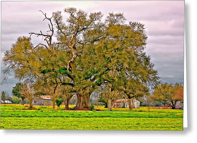 Oak Alley Plantation Greeting Cards - A Mighty Oak Greeting Card by Steve Harrington