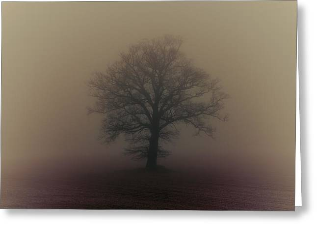 Bare Branches Greeting Cards - A misty morning Greeting Card by Chris Fletcher
