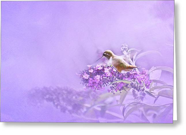 Hovering Greeting Cards - A Moment Greeting Card by Diane Schuster