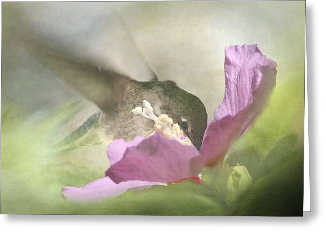 Rose Of Sharon Greeting Cards - A Moment in the Flower Greeting Card by Angie Vogel