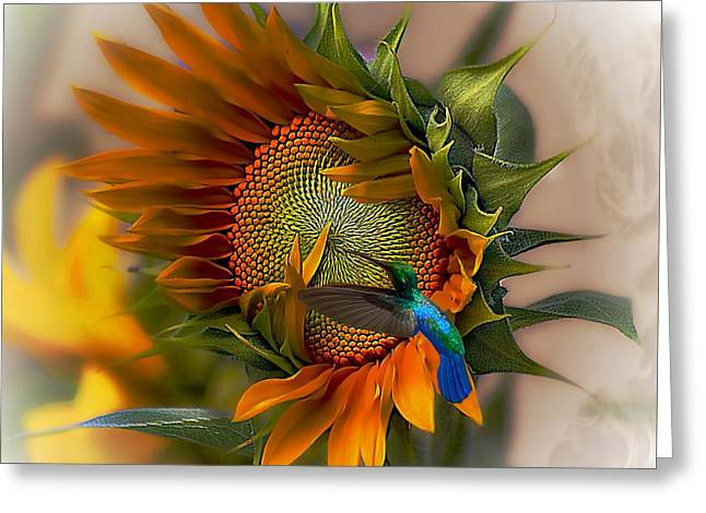 Hummingbirds Greeting Cards - A Moment In Time Greeting Card by John  Kolenberg