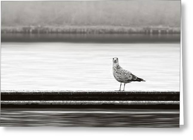 Gull Greeting Cards - A Moment in Time Greeting Card by Wim Lanclus