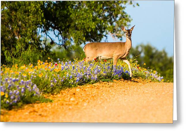 Wildflower Greeting Cards - A Moment with a Wildflower Deer Greeting Card by Ellie Teramoto